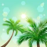 Tropiska palmträd och sol i zenit stock illustrationer