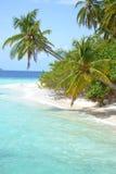 Tropiska palmträd och strand Arkivfoto