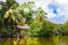 Tropiska palmträd på flodstranden Royaltyfri Foto