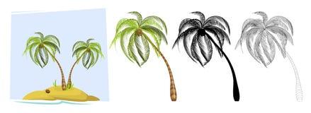 tropiska palmträd vektor Arkivfoto