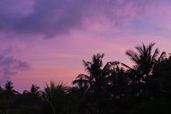 Tropiska palmträdkonturer på solnedgången royaltyfria foton