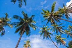 Tropiska palmträdsidor på den soliga dagen Arkivfoto