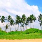 Tropiska palmtr?d p? den sandiga stranden royaltyfria foton