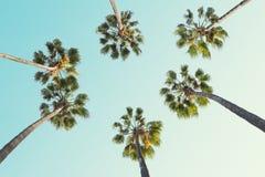 Tropiska palmtr?d p? klar sommarhimmelbakgrund tonad bild arkivbild