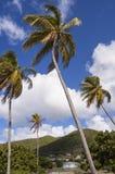 tropiska palmträd Royaltyfria Foton