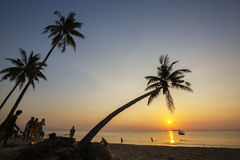 Tropiska palmträd för paradisstrandsolnedgång Royaltyfri Bild