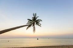 Tropiska palmträd för paradisstrandsolnedgång Royaltyfri Foto