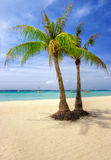 tropiska par Royaltyfria Foton