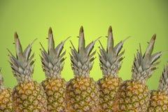 Tropiska pinapples på grön bakgrund Royaltyfria Bilder