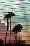 tropiska reflexioner Arkivfoto