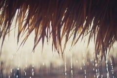 Tropiska regndroppar på ett vasstak Arkivfoto