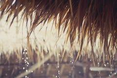 Tropiska regndroppar på ett vasstak Royaltyfri Bild