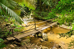 Tropiska regnskogar Arkivbild