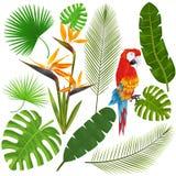 Tropiska sidor, blommor och aravektor Arkivfoton
