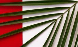 Tropiska sidor, closeup färgrik abstrakt bakgrund Lekmanna- lägenhet Arkivbild