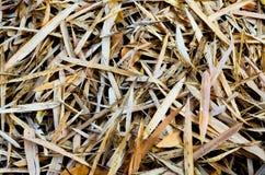 Tropiska sidor för bambu på jordning royaltyfri fotografi
