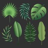Tropiska sidor för vektor royaltyfri illustrationer