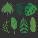 Tropiska sidor för vektor stock illustrationer