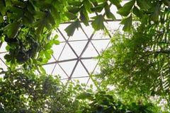 Tropiska sidor i botanisk trädgård Royaltyfri Fotografi