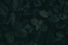 Tropiska sidor i mörk och lynnig skott ett djungel, arkivbilder