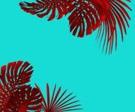 Tropiska sidor inramar duotonestil i rött och turkos med fritt utrymme för din text royaltyfria foton
