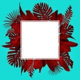 Tropiska sidor inramar duotonestil i r?tt och turkos med fritt utrymme f?r din text arkivfoto