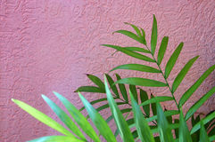 Tropiska sidor på bakgrund för pastellfärgade rosa färger vektor för detaljerad teckning för bakgrund blom- Arkivfoton