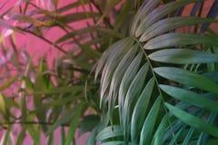 Tropiska sidor på bakgrund för pastellfärgade rosa färger vektor för detaljerad teckning för bakgrund blom- Arkivbilder