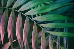 Tropiska sidor på bakgrund för pastellfärgade rosa färger vektor för detaljerad teckning för bakgrund blom- Royaltyfri Fotografi