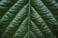 Tropiska sidor som är mörka - grön lövverk i rainforest royaltyfri foto