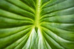 Tropiska sidor som ?r m?rka - gr?n l?vverk i rainforest royaltyfri fotografi