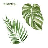 Tropiska sidor upps?ttning som f?r vattenf?rg isoleras p? vit bakgrund Handen m?lade den botaniska illustrationen f?r sommar av e stock illustrationer