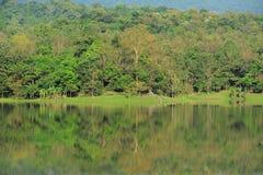 Tropiska skogar. Royaltyfria Bilder