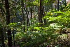 Tropiska skogar av madeiraön Arkivbild