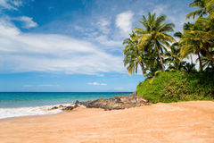 tropiska strandhawaii palmträd Arkivfoto