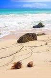 tropiska strandkokosnötter Arkivfoto