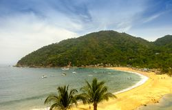 tropiska strandpalmträd Arkivfoton