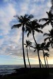 tropiska strandpalmträd Royaltyfri Fotografi