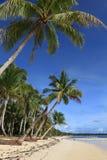 tropiska strandpalmträd Fotografering för Bildbyråer