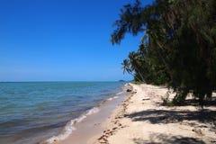 tropiska strandpalmträd Arkivbilder