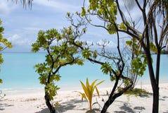 tropiska thickets Arkivbilder