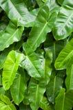 tropiska tjänstledigheter med regndroppe Arkivbilder