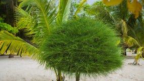 Tropiska träd på kusten PHANGAN, THAILAND Arkivbilder