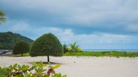 Tropiska träd på kusten PHANGAN, THAILAND Arkivfoton
