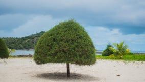 Tropiska träd på kusten PHANGAN, THAILAND Royaltyfria Bilder