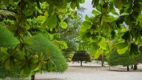 Tropiska träd på kusten PHANGAN, THAILAND Fotografering för Bildbyråer