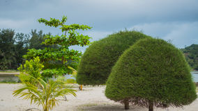 Tropiska träd på kusten PHANGAN, THAILAND Royaltyfri Fotografi