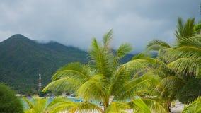 Tropiska träd på kusten PHANGAN, THAILAND Royaltyfri Bild