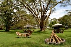 Tropiska träd, på som han sätter på land Arkivfoton