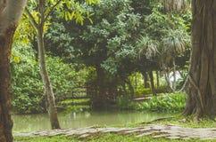 Tropiska trädgårdar/asiatträdgård Royaltyfri Foto